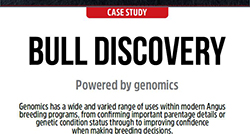 Bull Discovery Case Study