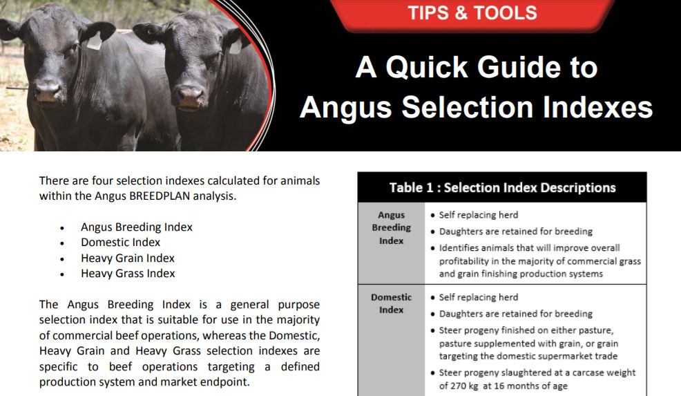 A Quick Guide to Angus Selection Indexes