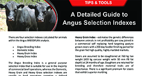 A Detailed Guide to Angus Selection Indexes