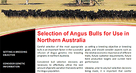 Selection of Angus Bulls for Use in Northern Australia