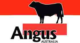 Angus Cattle Assessment Guidelines