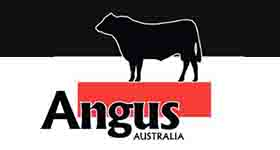 Black Angus Cattle Assessment Guidelines