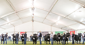 2019 Beachport Liquid Mineral Royal Adelaide Angus Feature Show