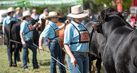 Sydney Royal Easter Show Angus Youth program