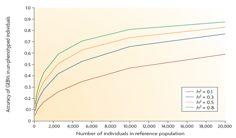 Figure 4 – Relationship between the number of animals in the reference population (with genotypes and phenotypes) and accuracy of EBVs of animals genotyped only at differing levels of trait heritability.