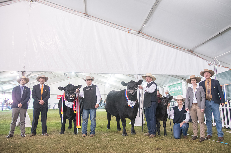 All Breed Grand Champion Pair