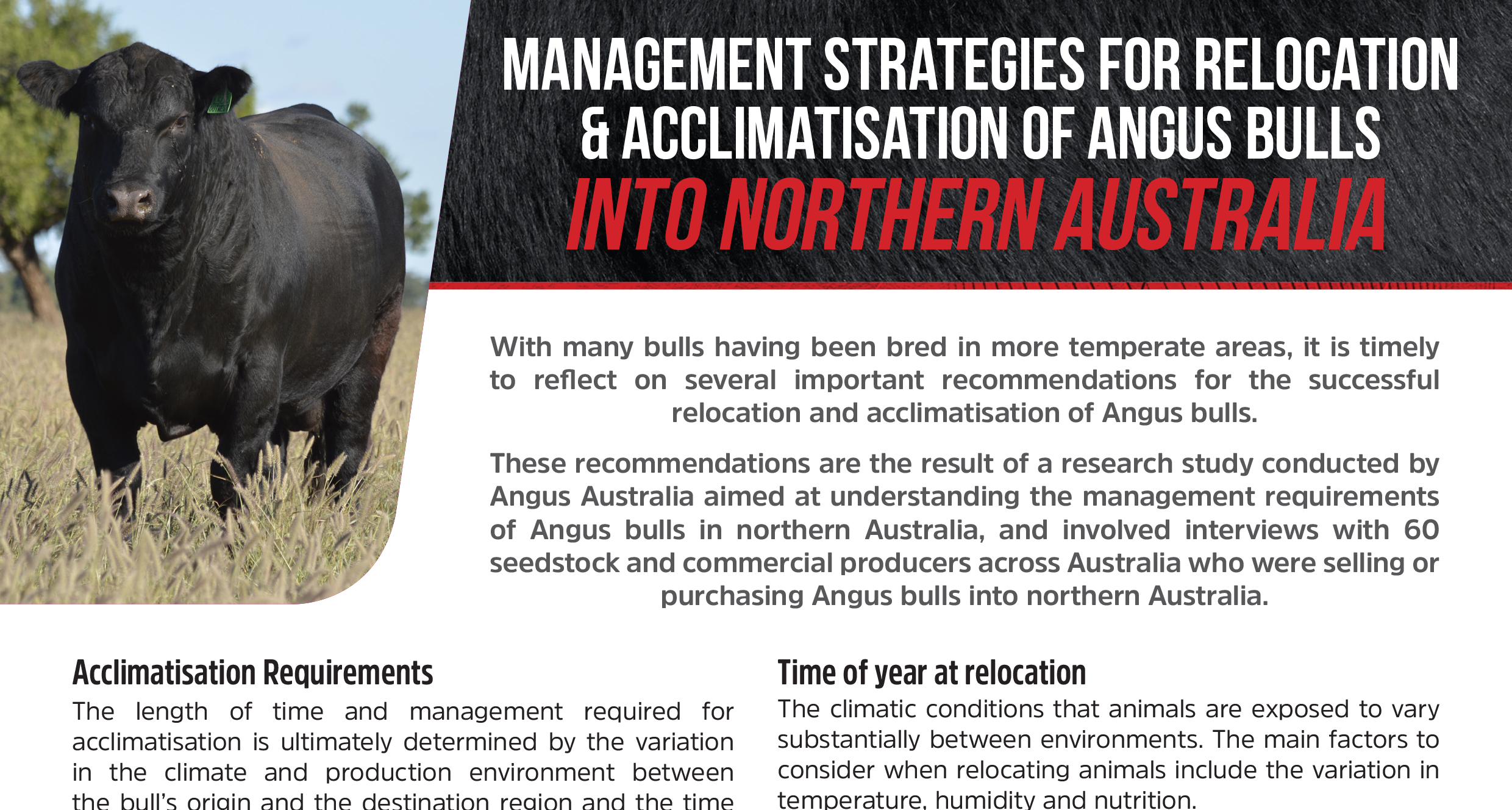 Management Strategies for Relocation & Acclimatisation of Angus Bulls