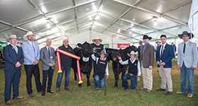 An Angus Royal Flush in the 2019 Royal Adelaide Interbreed
