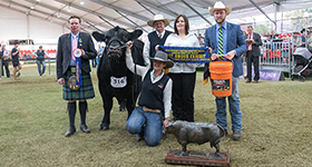 A Historic Angus Display at the 2019 Sydney Royal Angus Feature Show