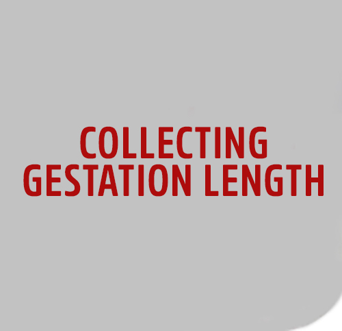 COLLECT-GEST