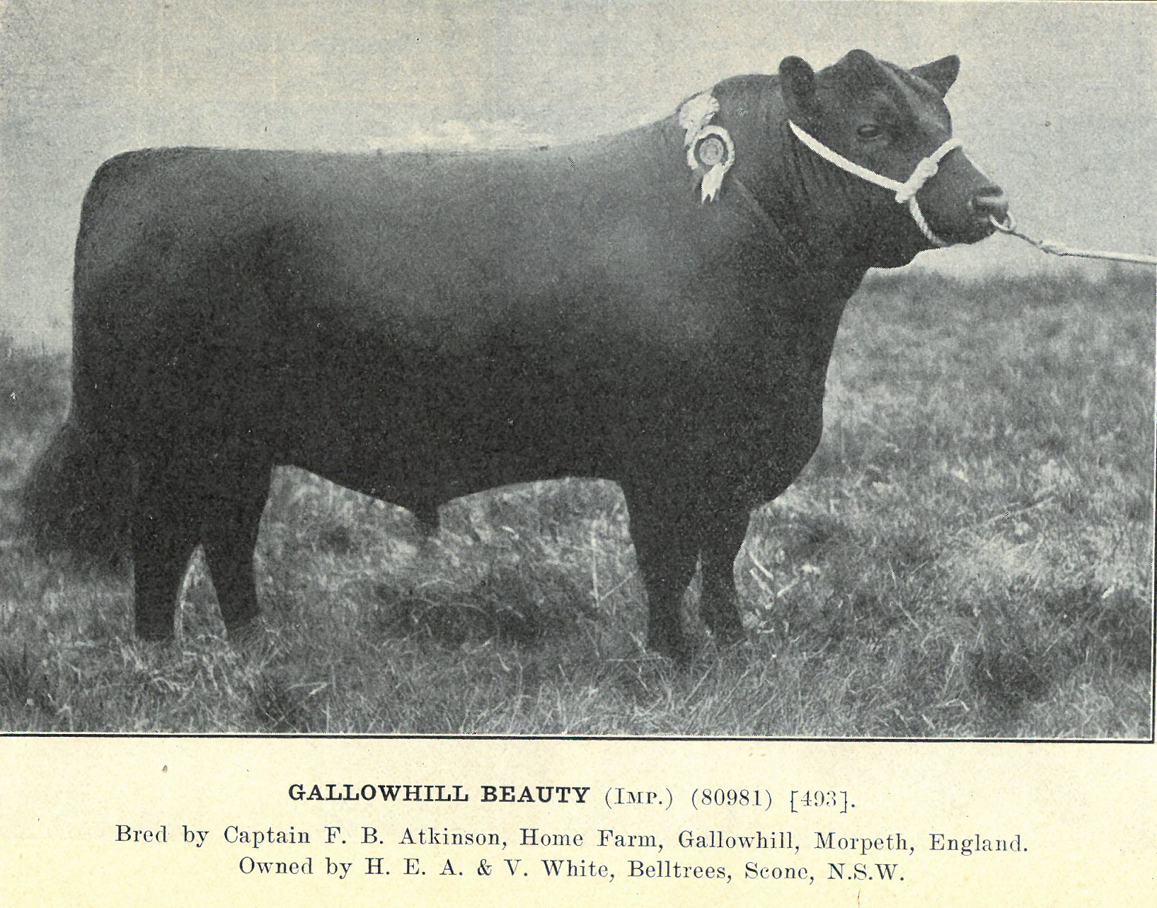 Gallowhill Beauty