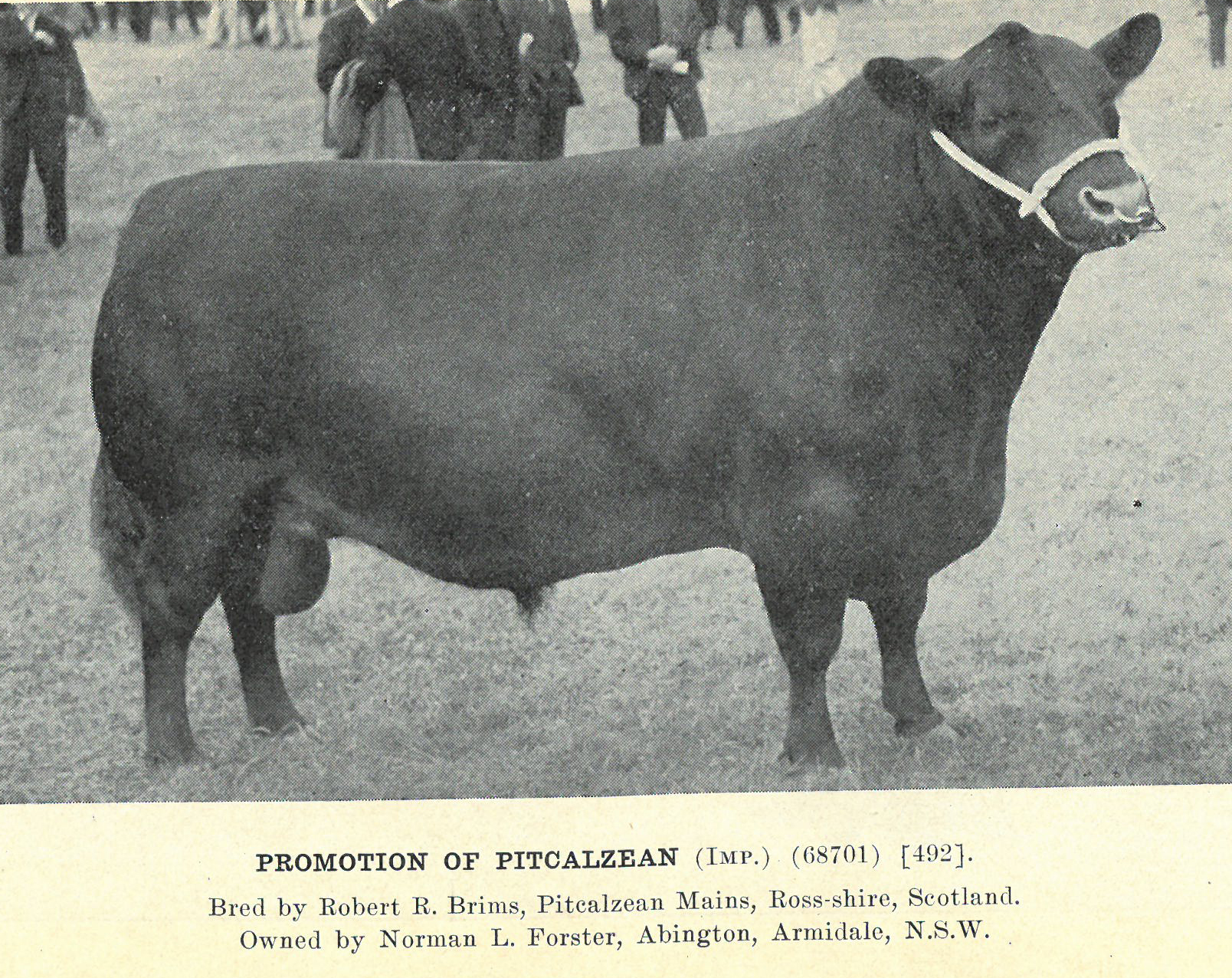 Promotion of Pitcalzean