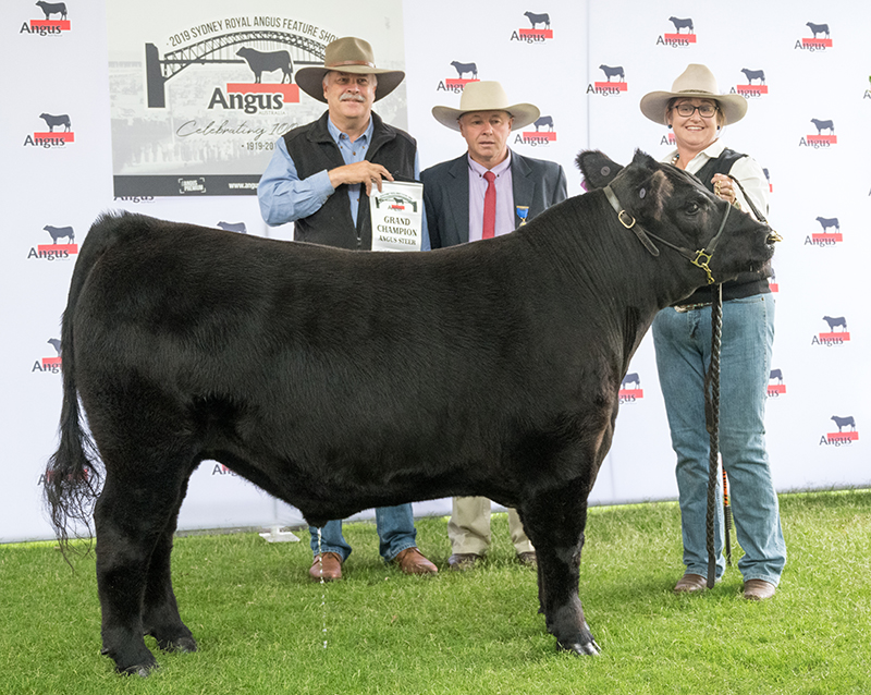 Grand Champion Angus Steer - exhibited by BW & MM Brooker