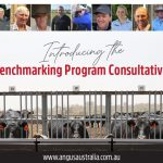 Introducing the new Angus Sire Benchmarking Consultative Committee