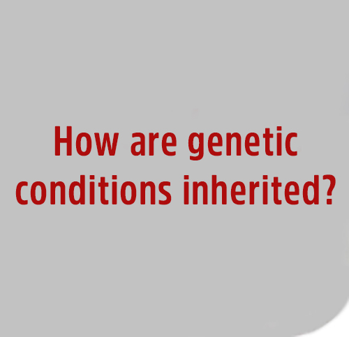 How-are-genetic-condition-inherited
