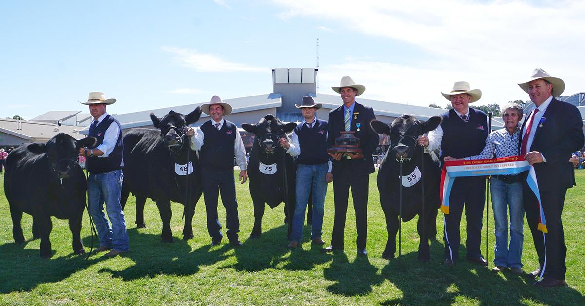 Interbreed Champion Breeders Group - Pine Creek Angus