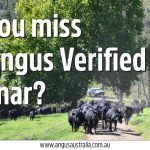Did you miss the recent Angus Verified webinar?